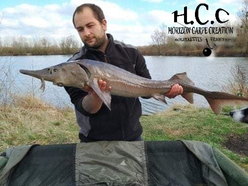 ALEXIS AMMANN - CLIENT HCC
