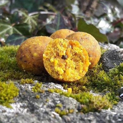 Scopex abricot 2